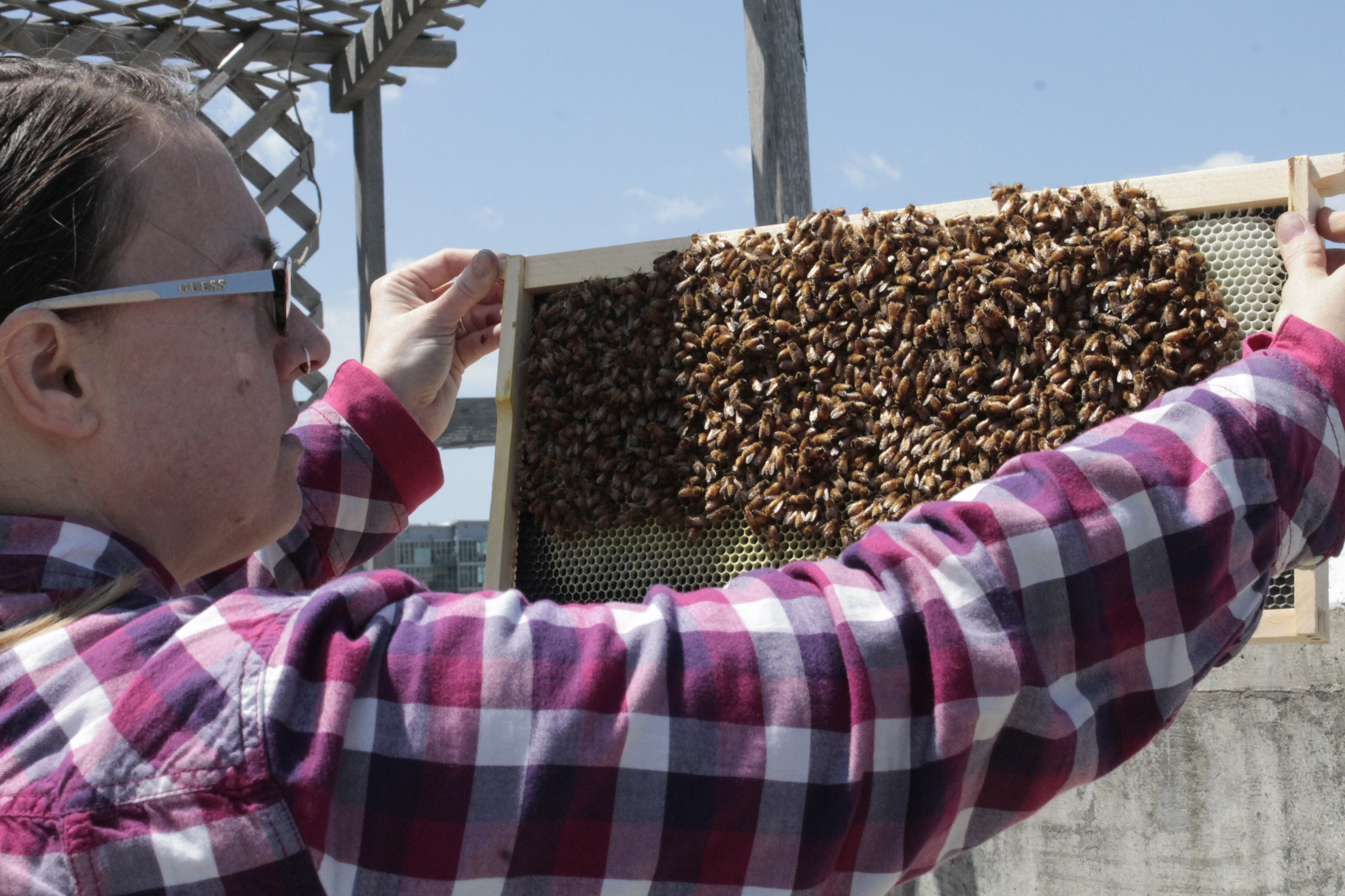 Tammy Perlmutter holding a frame of bees